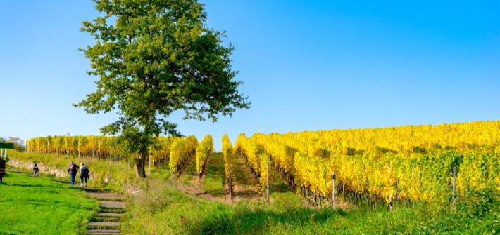 Weinwanderung in Rheinland-Pfalz: von Gutsausschank und Strausswirtschaft