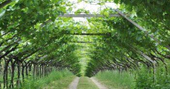 Weinsafari: auf Weintour an der Südtiroler Weinstraße
