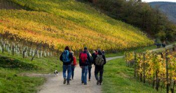 Weinwanderung an der Nahe: über den Wein-Wanderweg nach Martinstein