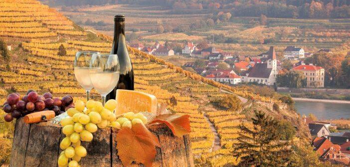 Wissenswertes über Wein aus Österreich