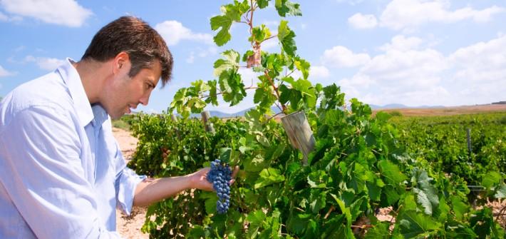 Der Tempranillo: Fruchtig und frischer Rotwein aus La Rioja