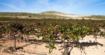 Monastrell: Kräftiger Rotwein aus dem Süden Spaniens