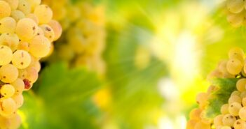 Riesling trocken 2012, Edition Sommertraum, Ortenauer Weinkellerei OWK bei Edeka