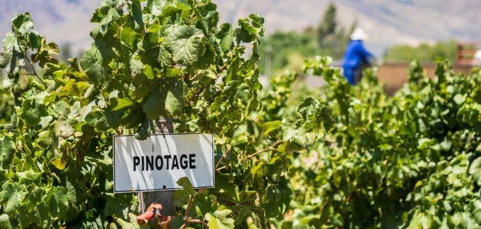 Weinrallye #76: Pinotage – der Ungeliebte