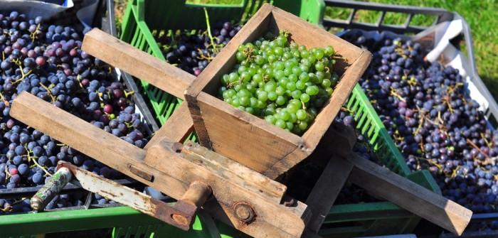 Sancerre 2013 von ALDI: L'Escarpe von Grands Vins Selection, Saint Jean d'Ardieres