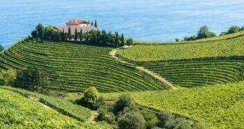Weinbau in Spanien: ein bedeutender Wirtschaftszweig