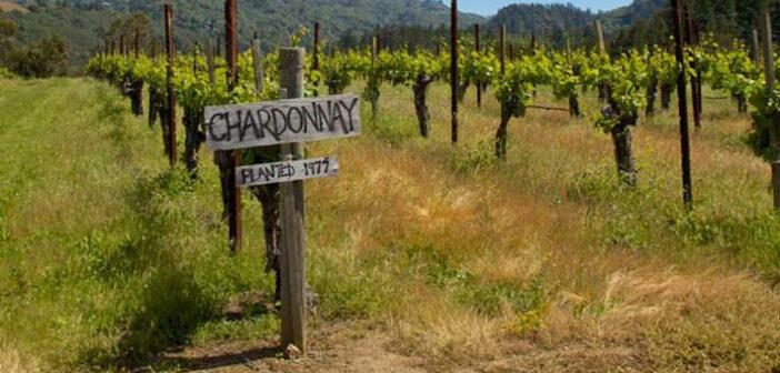 Chardonnay Wein: der trockene Weisswein aus Frankreich
