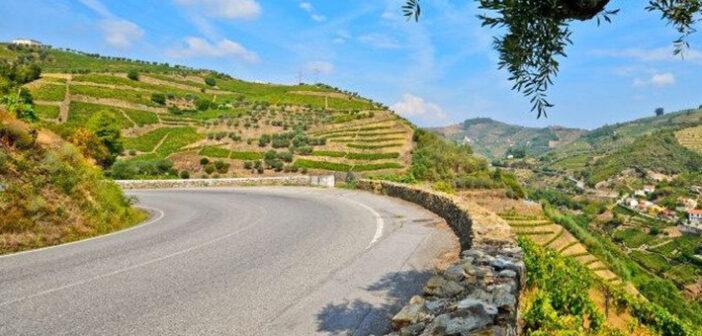 Ribera del Duero: Feurige Tropfen aus Kastilien-Léon