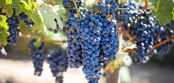 Willi Reis + Hubertus Reis: Weinbautradition an der Mosel