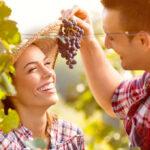 Weinklärung oder von veganen Weinen