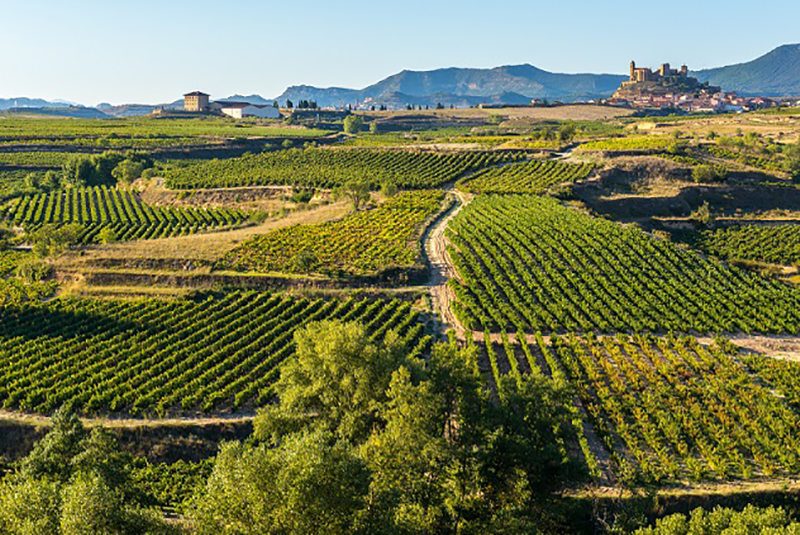 Rebanbaufläche und mehr als 150.000 Winzern ist Spanien unter den Top 5 der Weinanbauländer in Europa. (#01)