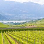 Urlaub im Oktober: Ideen für Weinliebhaber!