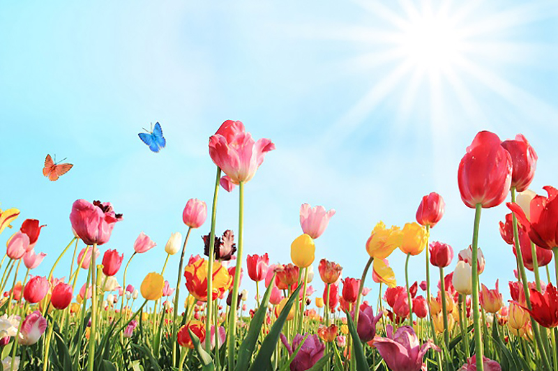 Frühling ist Natur. Der Frühling erweckt die Menschen aus dem tristen Grau-in-Grau und nutzt dafür die Natur. Leuchtende Farben kombiniert mit mächtig viel Grün müssen nun sein. So kann die Deko für das Spargel-Festessen bereits im Eingangsbereich beginnen und endet auf dem Tisch mit einem Gesteck aus frischen Blumen noch lange nicht. (#04)
