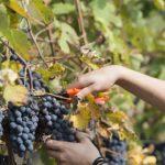 Das Piemont: eine Weinreise der Superlative