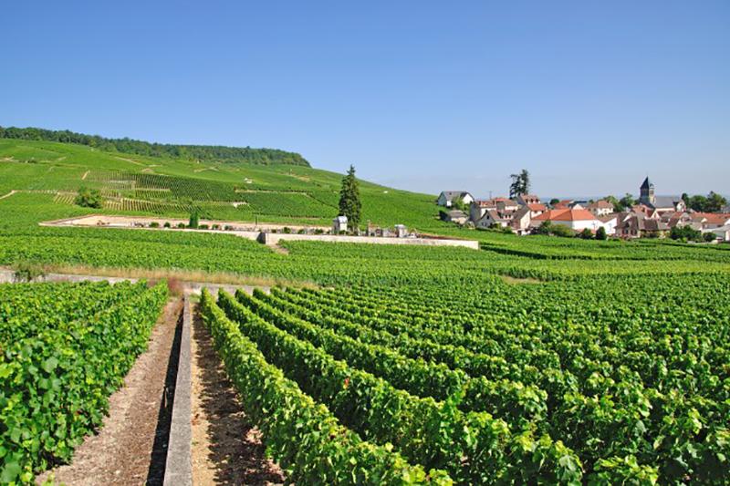 Die wunderschöne Champagner Region in der Ardenne nahe Épernay lädt zum Träumen ein. (#1)