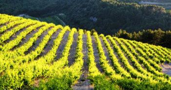 Französischer Wein aus dem Vaucluse – unbedingt probieren!