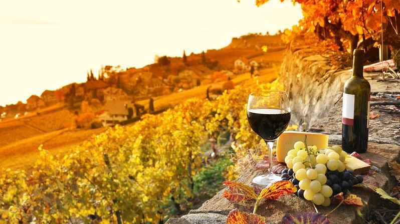 Naturpark in Frankreich – schöne Natur, gutes Essen und erstklassiger Wein, all das kann man dort finden. Wer seinen Urlaub in einem Naturpark in Frankreich plant, sollte unsere Tipps beherzigen. (#03)