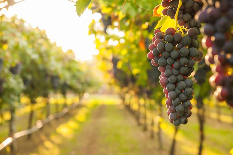 Ein weiterer Wein-Tipp zu Iphofen: Auf dem Geo-Ökologischer Lehrpfad am Schwanberg kann man viele interessante Fakten entdecken. (#4