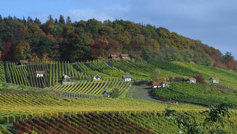 """Bereits seit dem 8. Jahrhundert wird in Franken Wein angebaut. Diese Tradition ist dabei bis heute mit jedem Glas zu schmecken. Ob man einen Frankenwein verkostet, der die """"Best of Gold""""-Auszeichnung trägt oder nicht – es ist immer ein echtes Geschmackserlebnis. (#02)"""