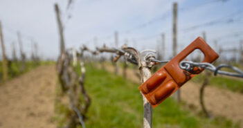 Traubenwickler Pheromonfallen: Wein Schädlinge bekämpfen