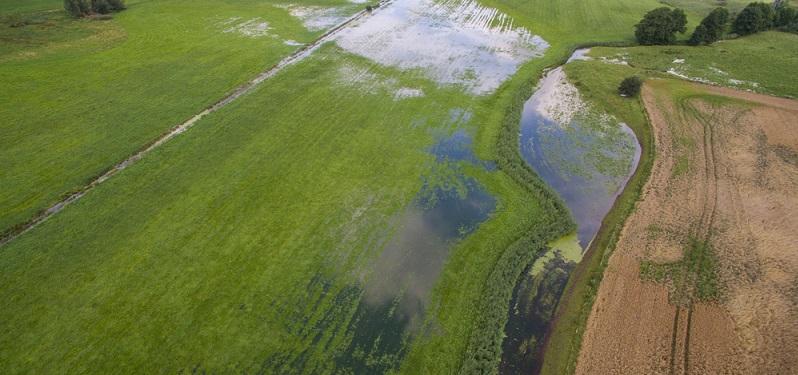 Auf der Grünlandfläche könnten nun zum Beispiel Bereiche zur Überflutung entstehen, wenn die Entwässerung derselben gestoppt wird. (#02)