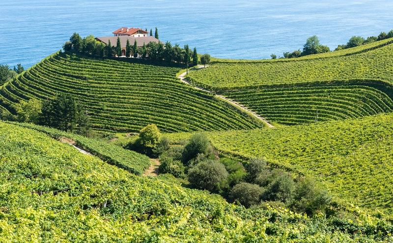 Ein besonderer Genuss ist hierbei der Vino Tinto von den Weingärten rund um die kleine Stadt Getaria. (#03)