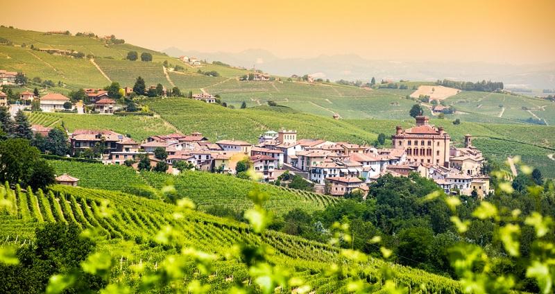 Die tiefrote Rotweinsorte stammt aus dem norditalienischen Piemont.