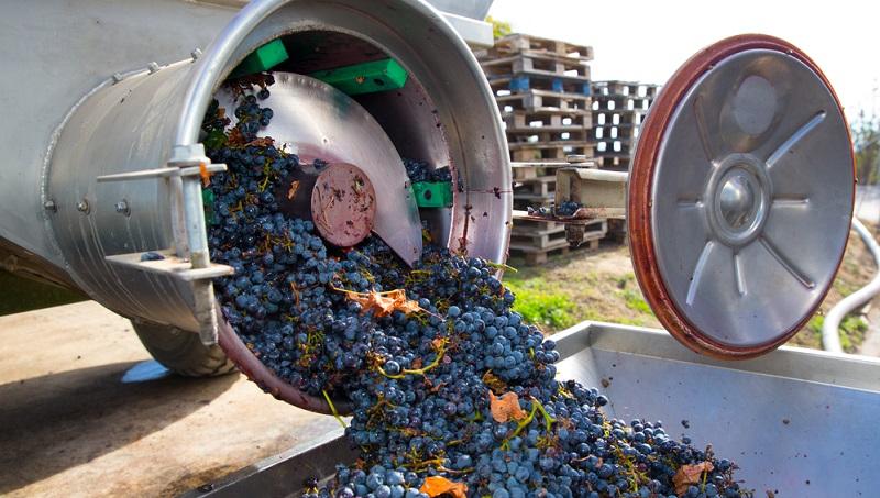 Ein wichtiges Ziel bei der Weinherstellung besteht darin, ein Getränk mit einem erheblichen Alkoholgehalt zu produzieren.