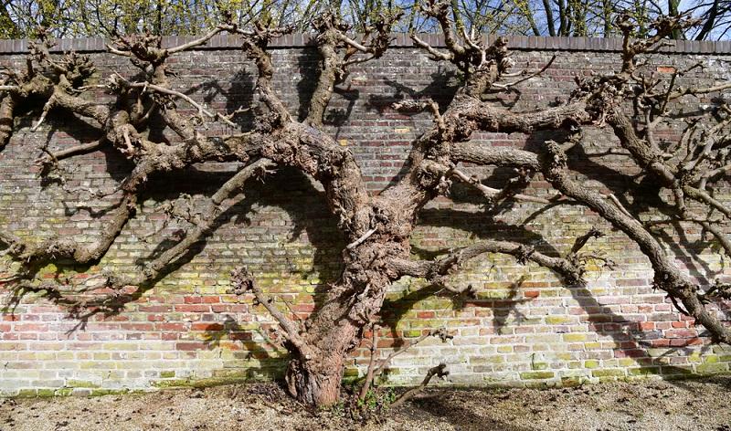 """Alter kommt vor Schönheit""""</strong> könnte auch beim Wein gelten. Hier sind es die <strong>""""Vieilles Vignes""""</strong> (<strong>alte Reben</strong>), die einen ganz besonderen Geschmack bieten und unter Kennern heiß begehrt sind.  ( Foto: Shutterstock-SBWorldphotography )"""