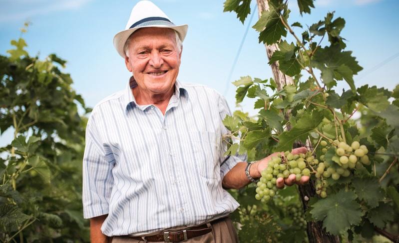 Der Weinbauer ist ein Handwerker, der zu 100 Prozent wissen muss, was er tut. ( Foto: Shutterstock-_adriaticfoto)